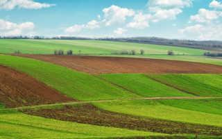 Как продать земельный участок в году, межевание